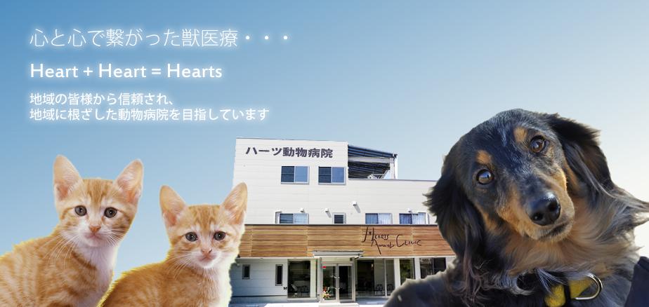 福山市 動物病院
